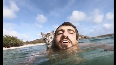 Gracie the kitten shows off her incredible swimming skills!