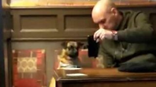 Dog confused after looking at owner's smart phone screen