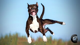 The Funniest Animal Fails Compilation.