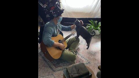 Cat commercial