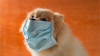 Pet Owners Are Buying Face Masks To Protect Their Furry Friends From Coronavirus