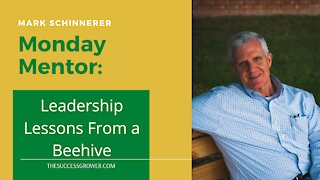 Leadership Lessons from a Beehive