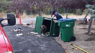 Three Bear Cubs Rescued From Being Trapped Inside Dumpster