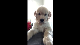 Puppy has priceless reaction to his own video image