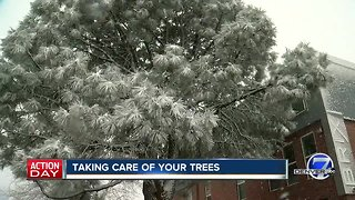 Taking care of your trees