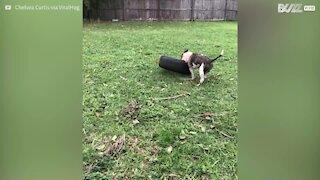 Une chienne tente de s'habituer à son nouveau jouet… un pneu !