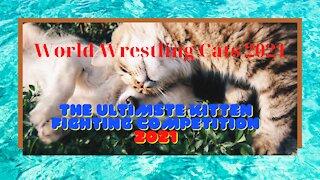 World Wrestling Cats 2021