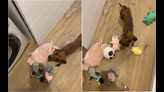 Dog furious that owner washed all her stuffed animals