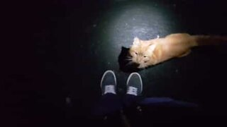 Gato persegue pessoa na rua na Inglaterra