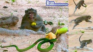 Monkey with snack prank