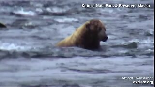 Bears fishing at Katmai National Park in Alaska