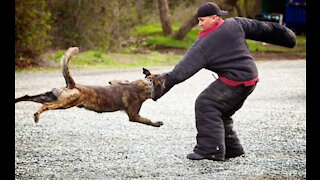 How to defend yourself against dog