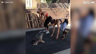 Cane adora allenarsi con la padrona