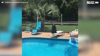 Il cane adora tuffarsi dal trampolino