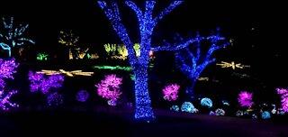 Cheekwood Christmas Lights
