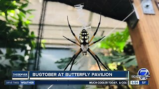 New spider pavilion opens today at Butterfly Pavilion