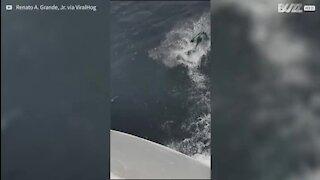 Marinheiros vivem momento único com golfinhos