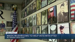 House Bill aims to use mushrooms to help treat veterans with PTSD