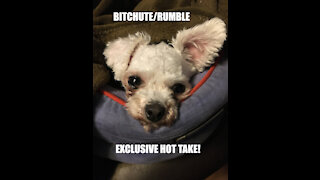 Rumble/Bitchute Exclusive Hot Take: Sept 18 News Bast!