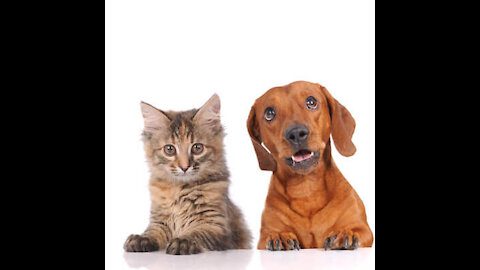 Pet Dog Animal Very Cute Very Funny 😁