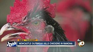 Newcastle disease hits Ramona, killing chickens