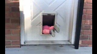 Little girl can't get enough of pet door