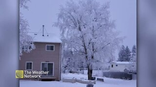 A snowy coating on the trees in Fort St. John, BC