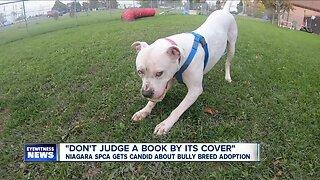 "Niagara SPCA gets candid about ""Bully Breed"" dog adoption"
