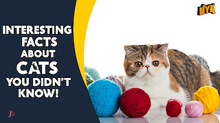 Interesting Facts about Cats you didn't know *