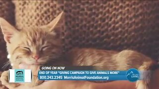 Matching Donations Up To $200,000 // Morris Animal Foundation
