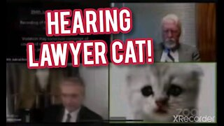 LAWYER CAT ON ZOOM HEARING!