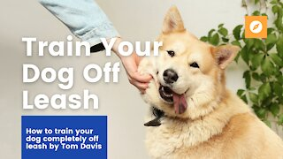 Safely Train Your Dog COMPLETELY OFF LEASH!