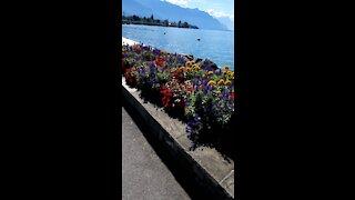 Walking in Switzerland near the lake of geneva