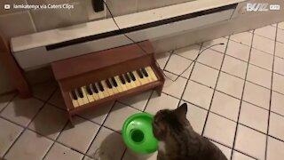 Gato toca piano para pedir comida! -1