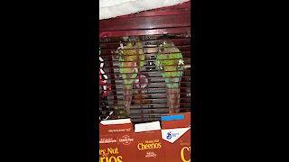 Parrots' reaction before I leave