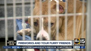 Keeping your furry friends safe during New Year's