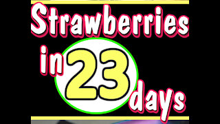 Growing Strawberry Plants from Slices of Strawberries