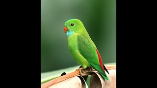 Bird parrot green