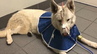 Dog miraculously rescued after getting hit by car