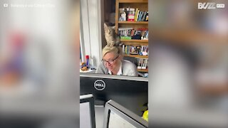 Cat falls asleep on top of owner's head