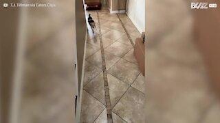 Cão conhece bebés pela primeira vez!