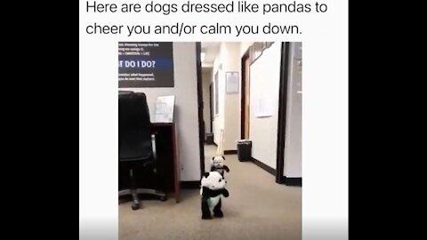 CUTE PANDA DOGGY