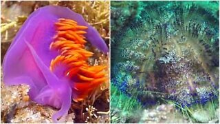 Eksotisk samling av underlige og fantastiske havdyr