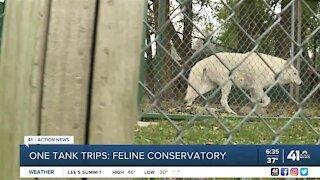 One Tank Trips: Feline conservatory