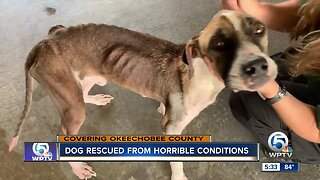 Dog rescued from horrible conditions in Okeechobee County