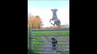 Jumping dog Funny Animals Funny Video