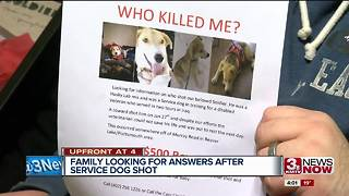 Family looking for answers after vet's service dog shot