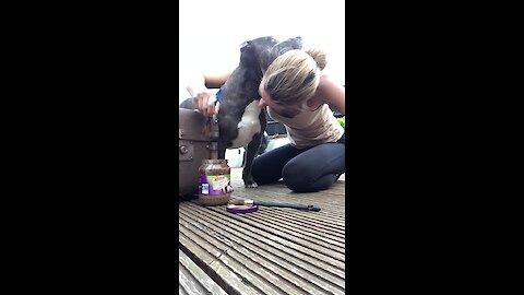 Dog hilariously interrupts owner's DIY video