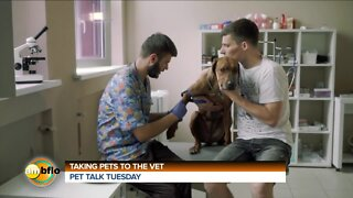 PET TALK TUESDAY -TAKING YOUR PET TO THE VET
