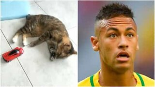Ultime notizie: Neymar si è trasformato in un gatto!